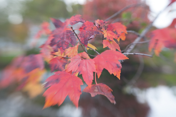 Tutorial: Editing Fall Foliage Photos (1/6)