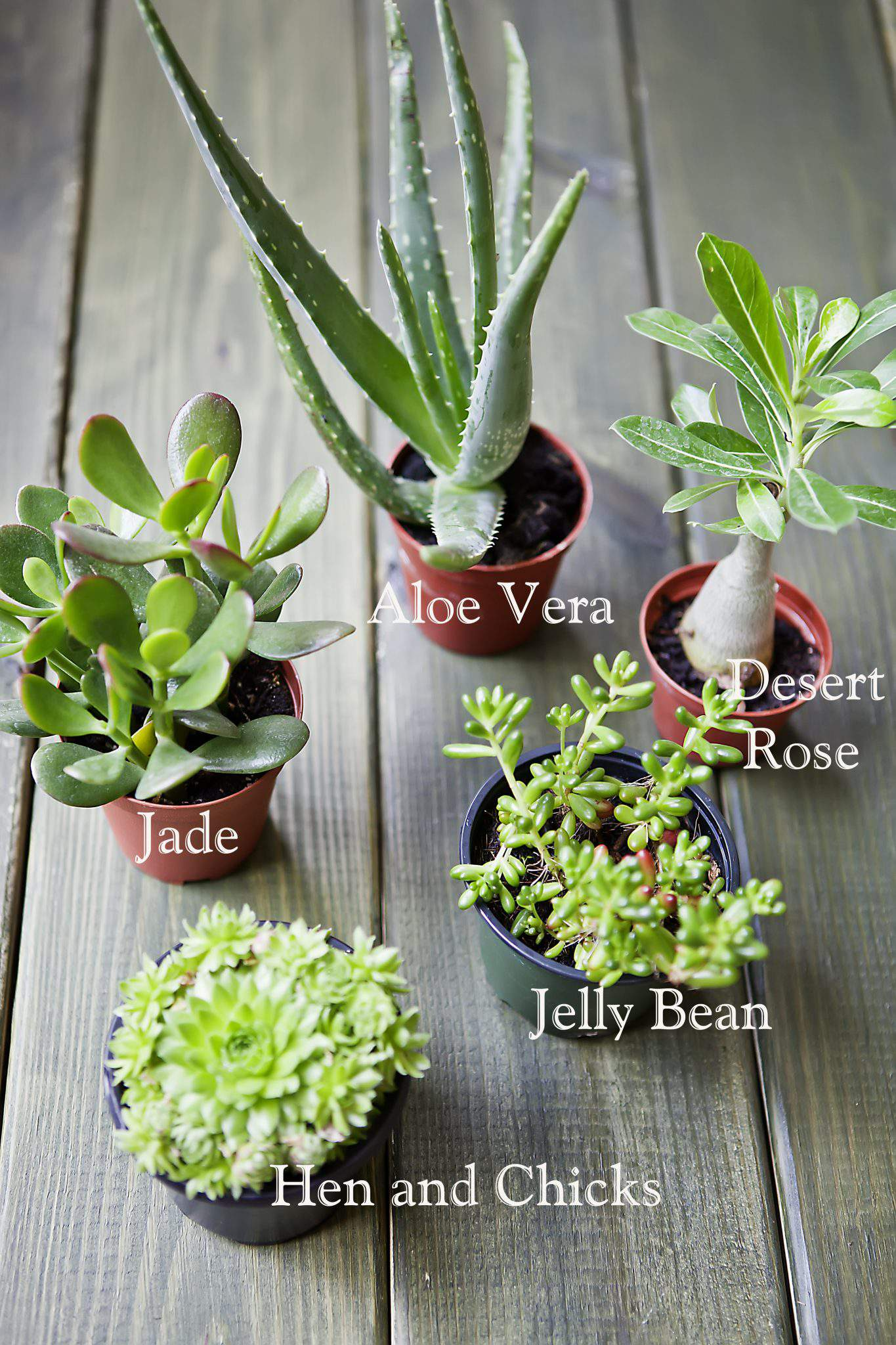 Indoor Plant Types 1000 43 Images About Succulents And Cactus Gardening On
