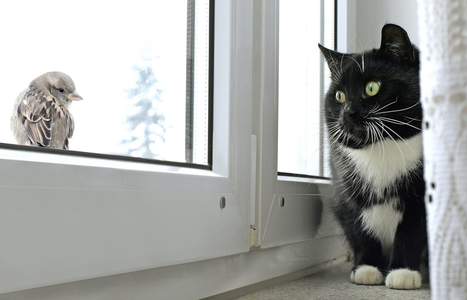 Cute Kitties Hd Wallpapers Threats To Birds Celebrate Urban Birds