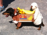 hipinion.com  View topic - Dogs in Disguise