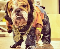Hollywood-Inspired Dog Costumes for Halloween