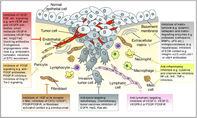 Ikk Login Therapeutic Targeting Of The Tumor Microenvironment