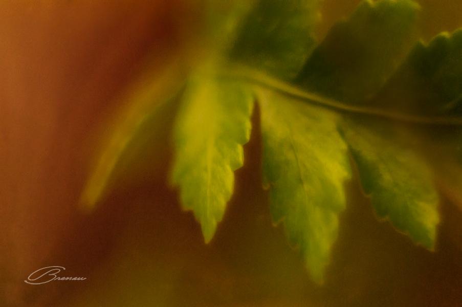 Summer Leaves.