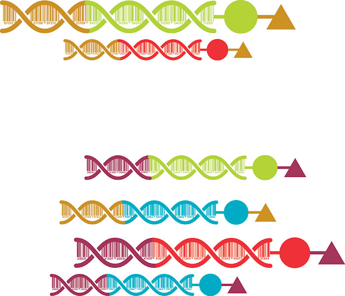 How DNA-encoded libraries are revolutionizing drug discovery June