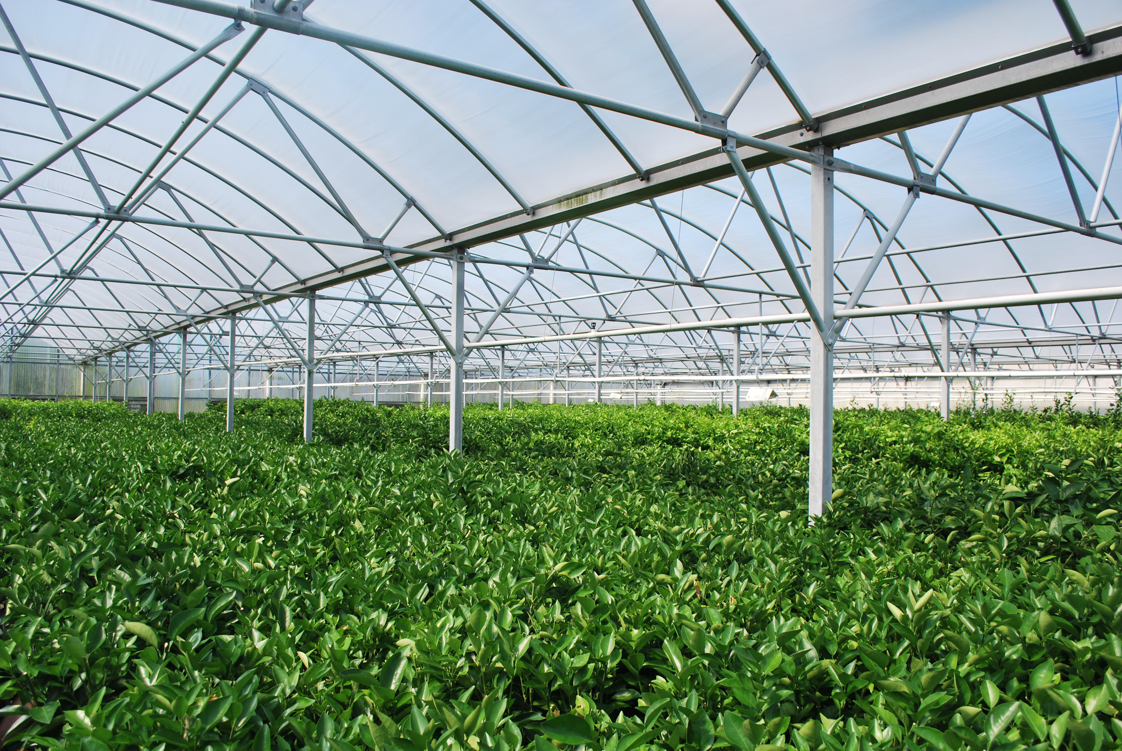 Hydroponic Dünger Greenhouses Hoophouses And Hydroponics Oh My Central