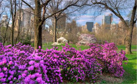Fall Time In Grape Fields Wallpaper Hidden Gardens The Top Ten Spring Flower Spots In