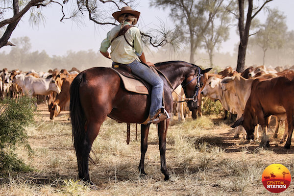 No Place Like Mum Mustering At Blina Central Station - Mustering Jobs Australia