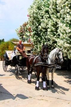 Paseos-y-excursiones-carruaje-Gandia