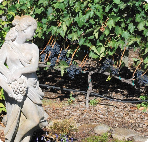 statue and grapes