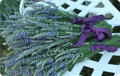 bundles of lavender