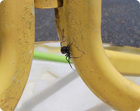 giant black widow