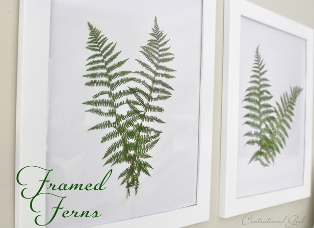 how to make a fern wall