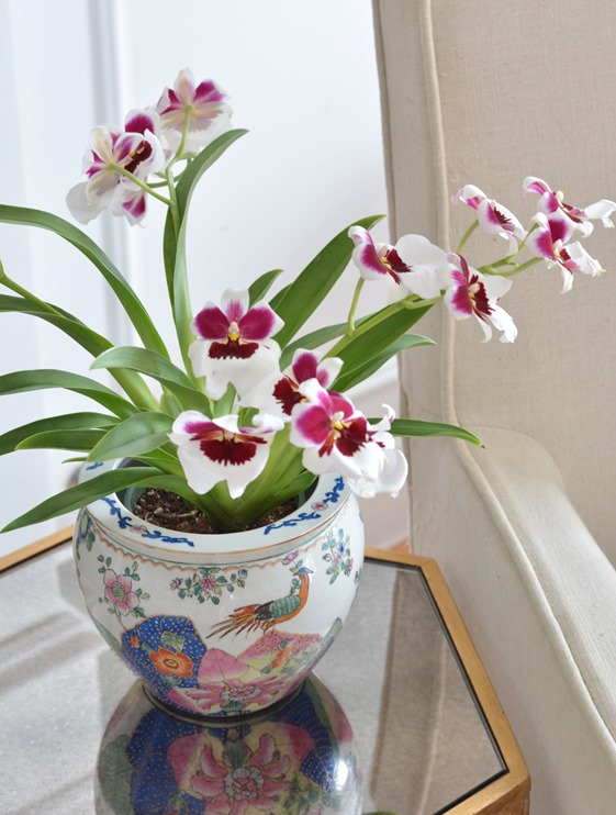 orchid in chinoiserie pot