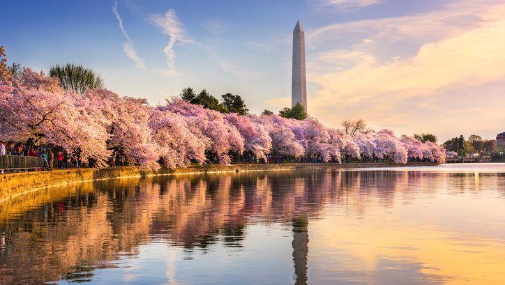 Seis lugares del mundo donde disfrutar de los cerezos en flor