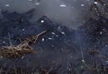 Poluare pe parâul Teslui
