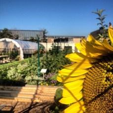 urban farming in Brooklyn