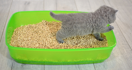 Litter Box Training For Your Kitten Petcoach