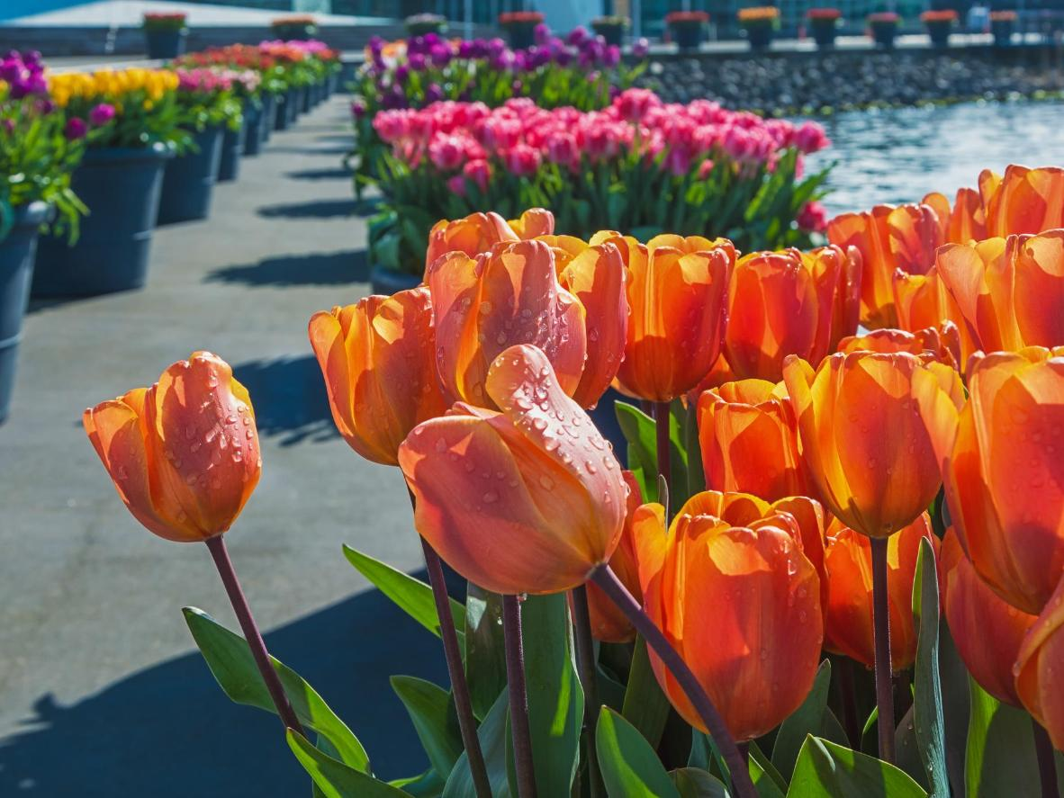 Holland S Top 4 Places To Marvel At Tulips Booking Com