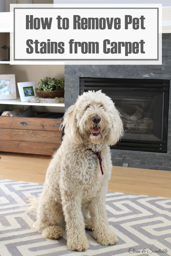 How To Remove Pet Stains From Carpet - Clean And Scentsible