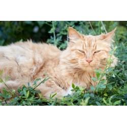 Small Crop Of Cat Has Bad Breath
