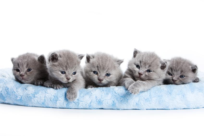 Cute Little Gray Cat For Wallpaper Names For Gray Kittens Slideshow