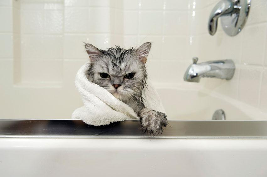 15 Funniest Pictures Of Wet Cats Slideshow