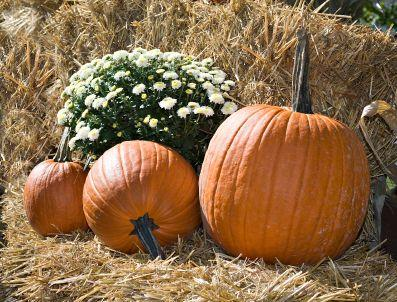 Fall Harvest Computer Wallpaper Straw Bale Gardening Lovetoknow