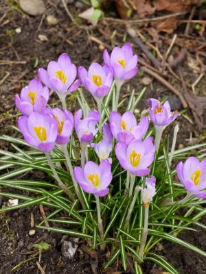 A List of Spring Flowers - photo of spring