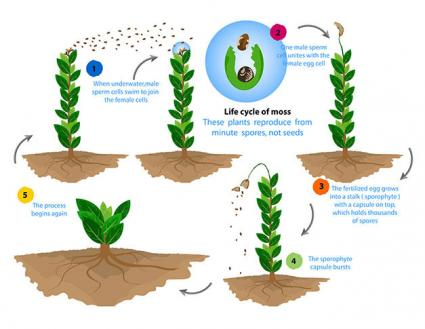 How Do Non-Flowering Plants Reproduce?