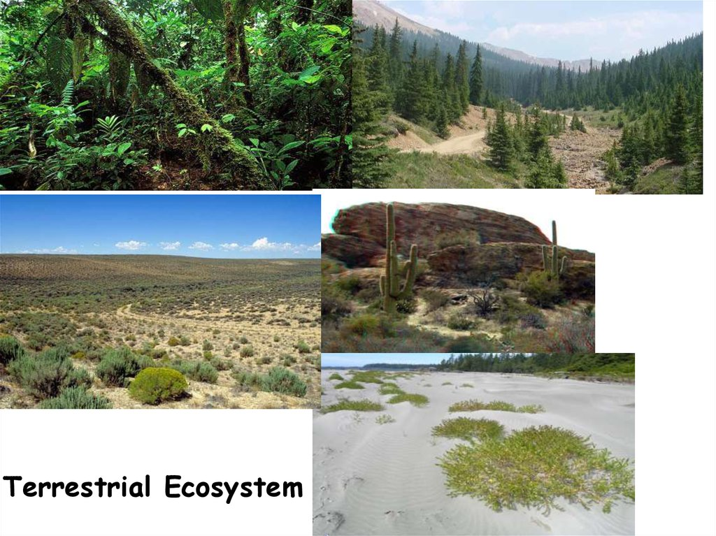 Ecosystems in the local area - презентация онлайн