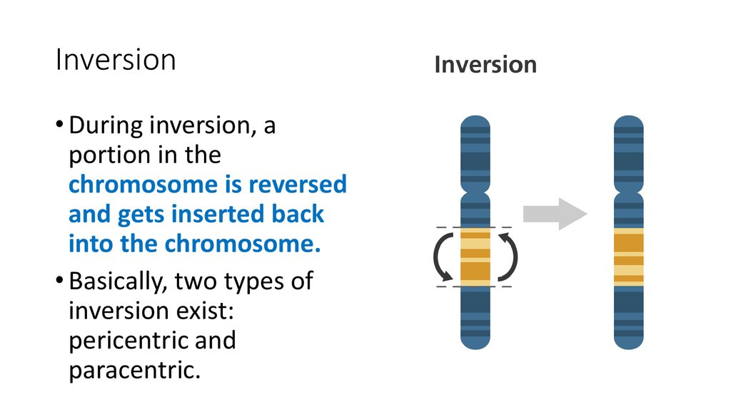 Chromosome Theory The Mechanism Of Chromosome, Gene Mutation. The Theory Of