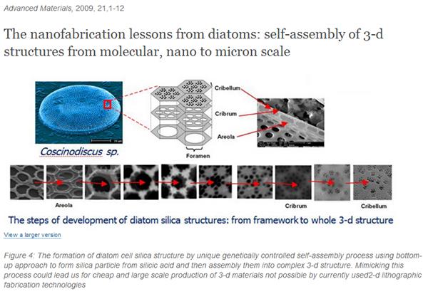 Phycokey - Diatoms (Bacillariophyceae)