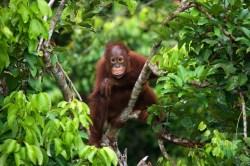 Small Of Jungle Friends Primate Sanctuary