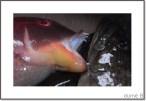 poisson-frais-thumb.jpg