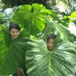 Flora Rainforest Costa Rica Osa Peninsula