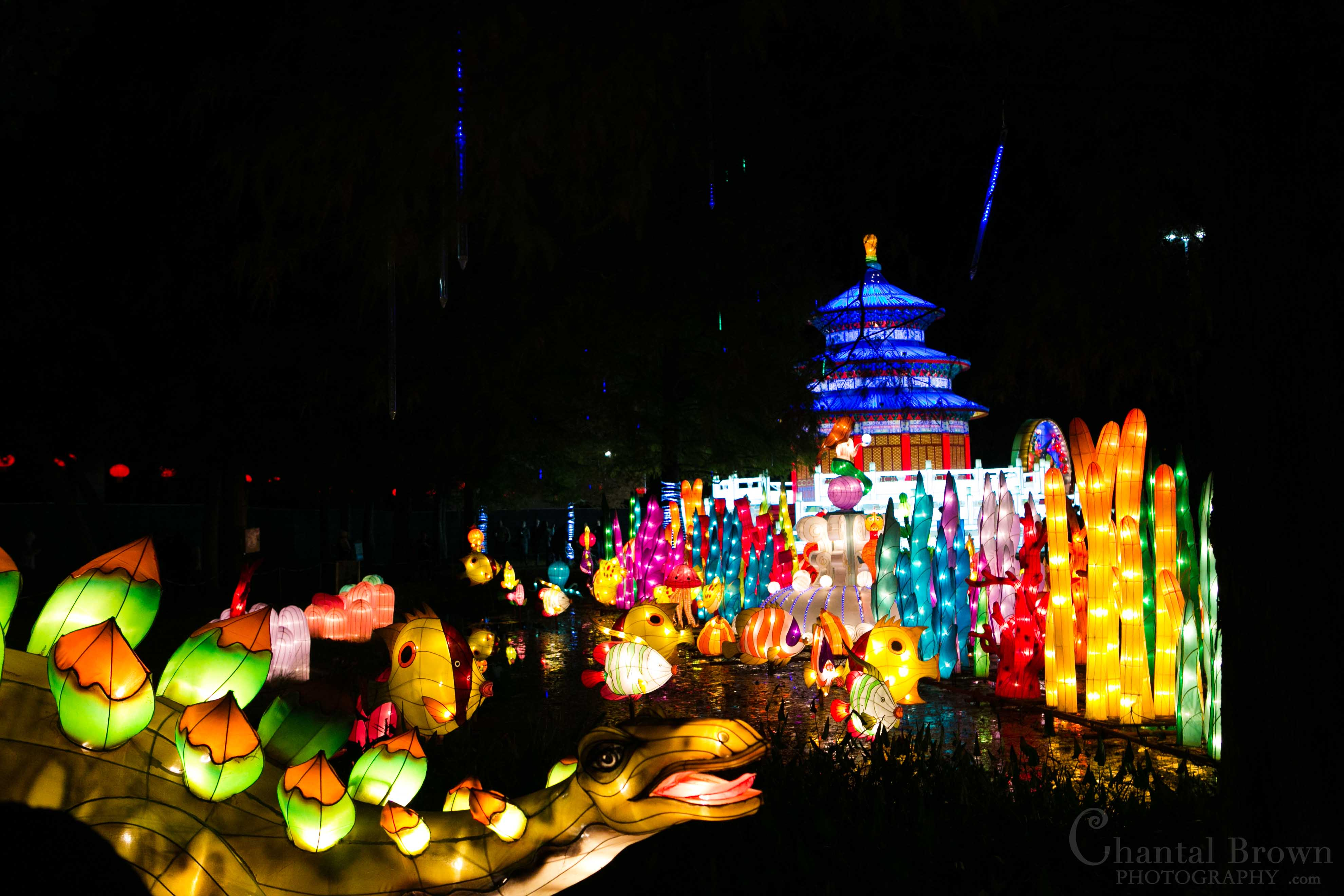 Happy Chinese Lantern Festival Chinese Lantern Festival Dallas 2014 Schedule Happy