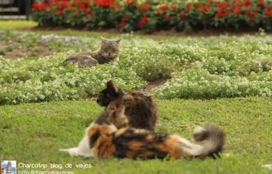 Gatos y mas gatos