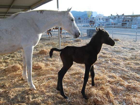 horse-mom-colt.jpg