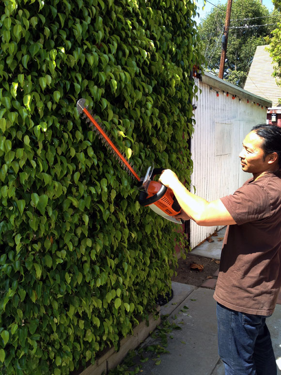 stihl-hsa-65-hedge-trimmer.jpg