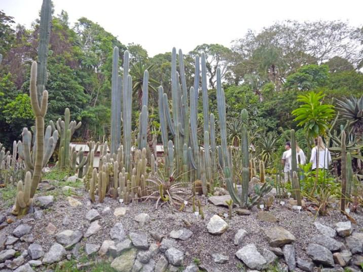 visiter-rio-jardin-botanique1-charonbellis