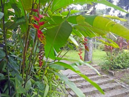 visiter-rio-jardin-botanique5-charonbellis
