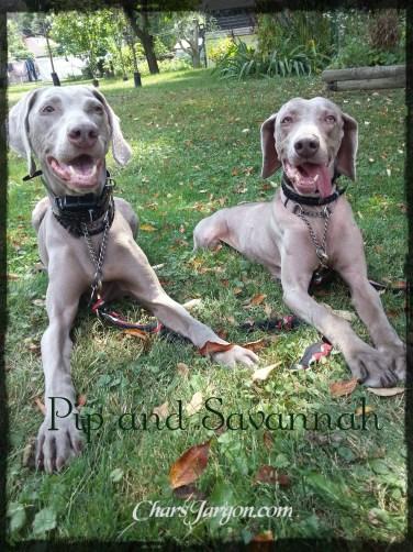 Pip and Savannah
