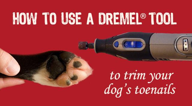 Dremel Tool For Dog Nails Nail Ftempo