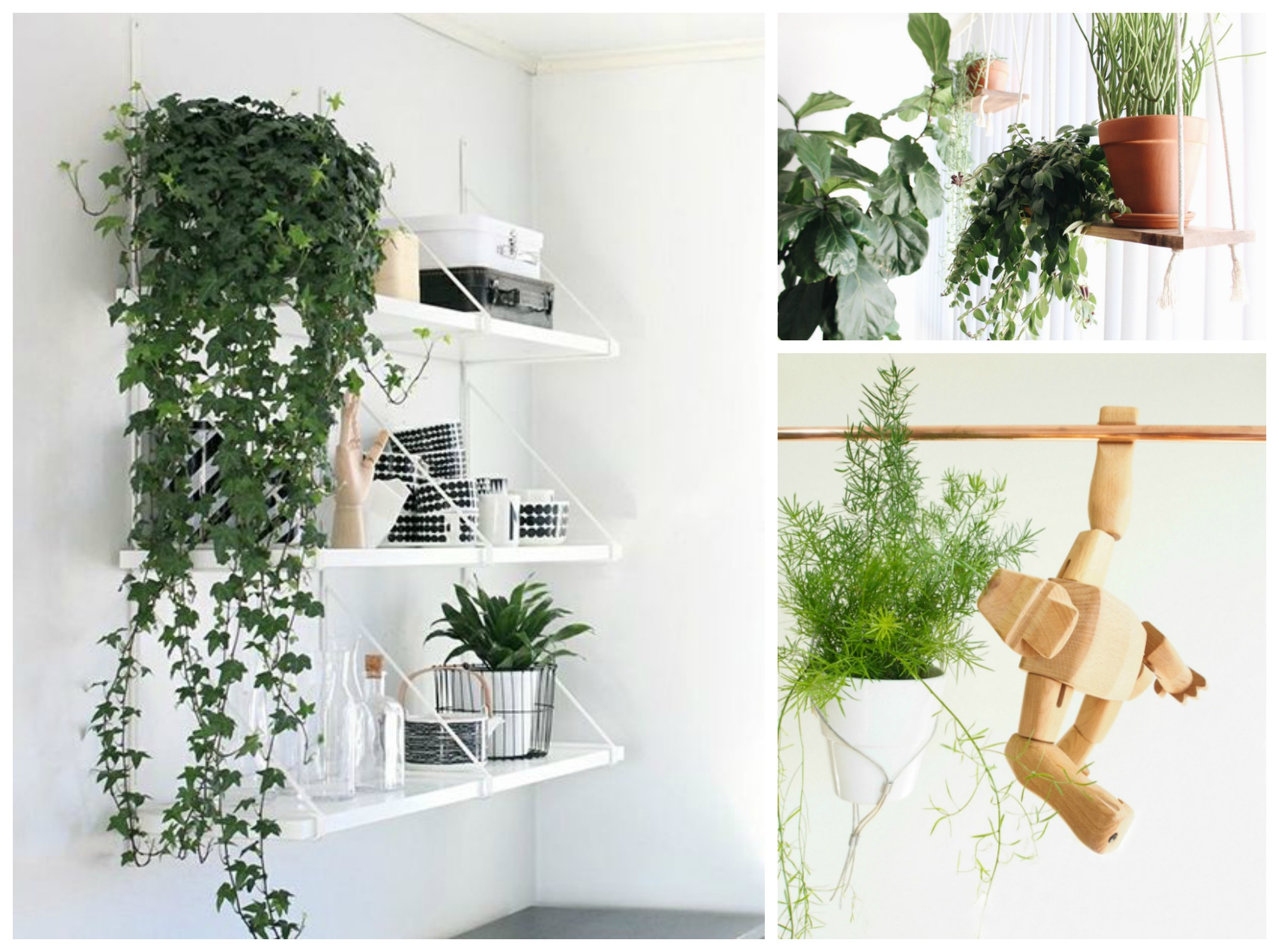 Hanging Planters Australia 10 Hard To Kill Hanging Plants That 39ll Make Your Home Look