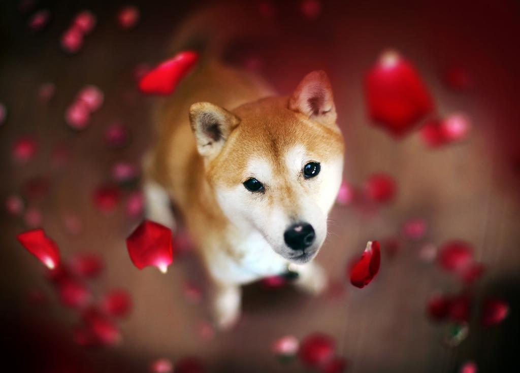 Fall Puppy Wallpaper De Sublimes Photos De Chiens Amoureux