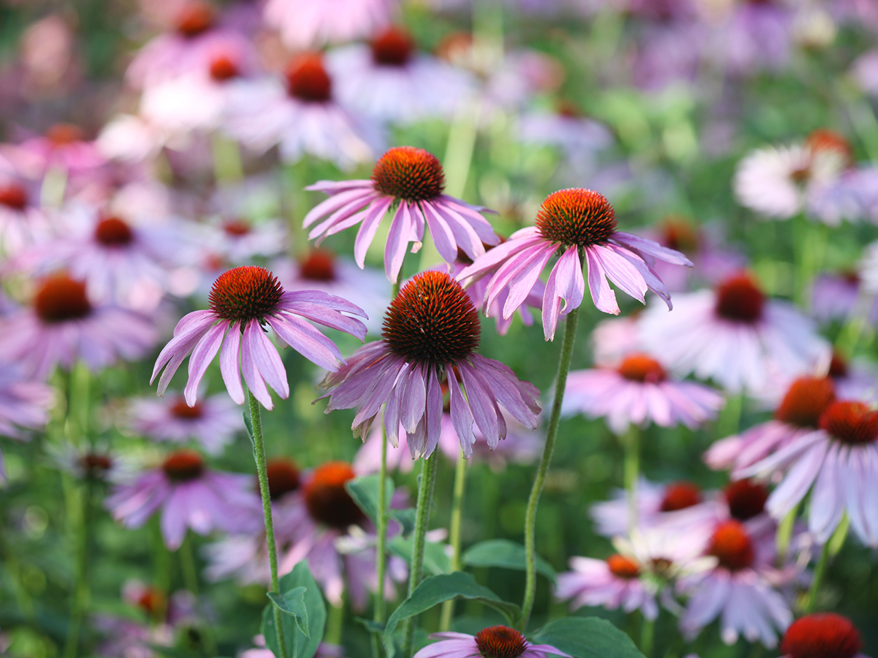 21 Easy Perennials To Plant In Canada Chatelaine
