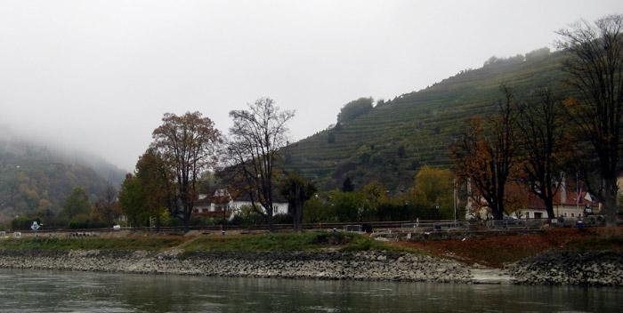Vineyards along the Danube River