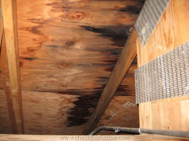 Attic Black Mold And Why Is It Growing In Your Attic