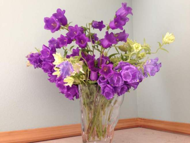 Mixed Campanula Bouquet