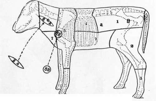pork ribs diagram what are pork shoulder steaks